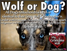 Wolf or Dog? Truth Found in DNA. by: Jennifer Kruse, LMT CRMT - writer also known as the
